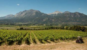 Chubut presentó el vino más austral del mundo