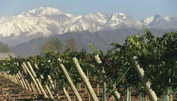 Crisis vitivinícola: entre la caída del consumo, más costos y  reclamos