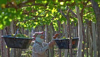 El vino genera más dólares y empleo que la soja: los datos que recibió Kulfas para cambiar retenciones