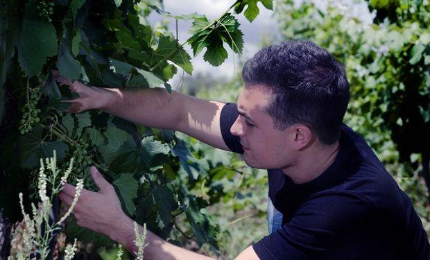 Matías Morcos, el enólogo revelación que con 24 años busca reivindicar la uva criolla