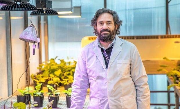 Descifraron un dato clave de las plantas tras analizar el primer virus que se descubrió en la historia