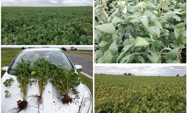 Vista de los cultivos durante el Crop Tour de Lanworth.