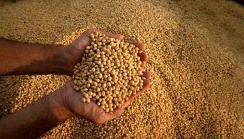 La soja mejora su valor respecto del maíz y gana competitividad