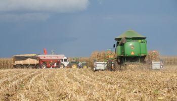 """El ingreso de una """"mega cosecha"""" de maíz desde Brasil amenaza a los precios"""
