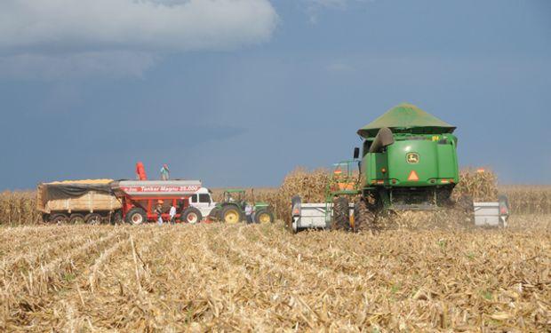 Maíz: podría esperarse que en las próximas semanas las ventas se desaceleren por la entrada del maíz brasilero al mercado mundial.