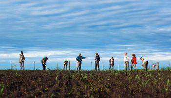 """Producen """"superalimentos"""" orgánicos con semillas ancestrales y aseguran que es rentable"""