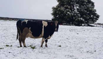 Producción lechera en Nueva Zelanda: cuál es la clave del exitoso modelo