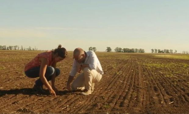 Superalimento: cosechan la semilla más chica del mundo en plena Pampa Húmeda y son caso de éxito