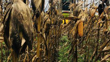La experiencia en cosecha, es de CLAAS
