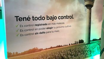 Llega Brucia, el nuevo herbicida para maíz de Summit Agro