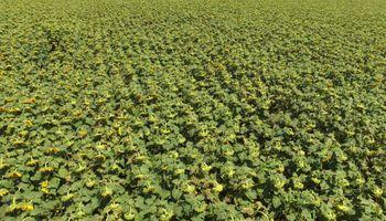 Seguir los cultivos desde un drone: la experiencia de un asesor en La Pampa
