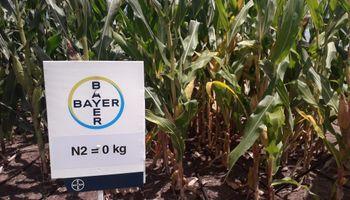"""CEO de Bayer Cono Sur: """"En Argentina el agro representa el 80% de nuestro negocio"""""""