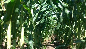 El clima vuelve a ser aliado de la cosecha gruesa