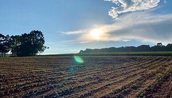 El área cultivable de Brasil podría más que se duplicarse para el ciclo 2039/40