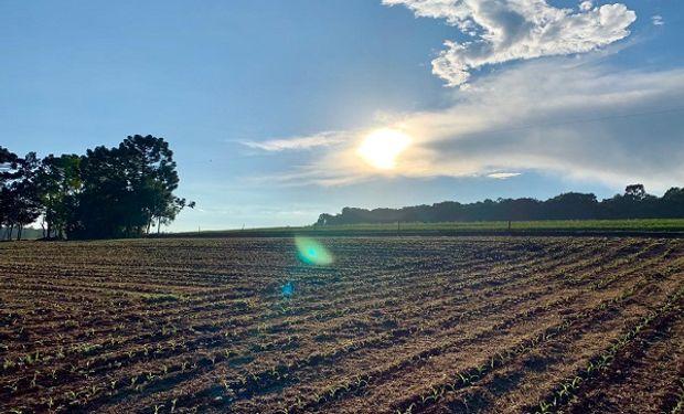 La producción total de soja aumentaría en 127 Mt hasta el año 2040 pasando de 108 Mt en el 2018 a 235 Mt en la campaña 2039/40.
