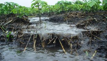 Terrazas: un método para atenuar los efectos de la erosión hídrica