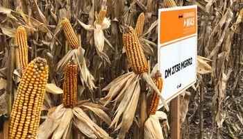 El líder en soja prende los motores del maíz