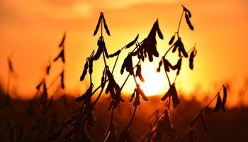La soja lidera las subas en Chicago y a nivel local