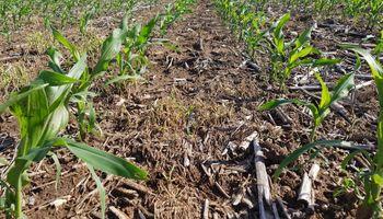 Alarma en Entre Ríos por la falta de agua en los suelos