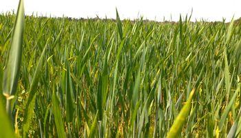 Agricultura periurbana: INTA encontró la solución