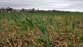 El clima inestable se instala en gran parte del país y no se descartan lluvias débiles