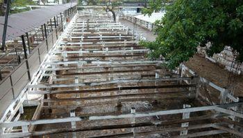 Paro del campo: en dos días ingresaron menos de 400 animales a Liniers