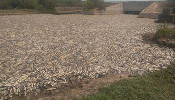 No se veía hace 10 años: impresionantes imágenes de peces muertos en Formosa