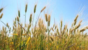 Brasil tendrá que importar más de 7 millones de toneladas de trigo