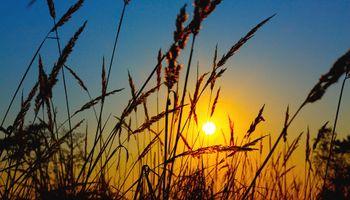 El precio del trigo lideró las bajas en un arranque de semana negativo