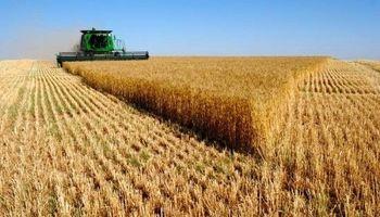 El trigo lideró las subas en un arranque de semana positivo para Chicago