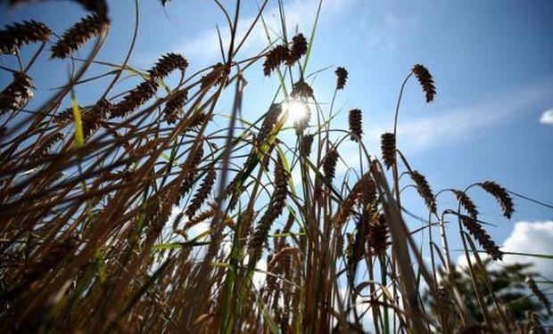 La exportación ya compró más trigo que en toda la campaña anterior.