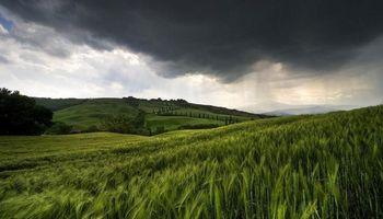 Bajas generalizadas en CBOT: el trigo fue el más perjudicado
