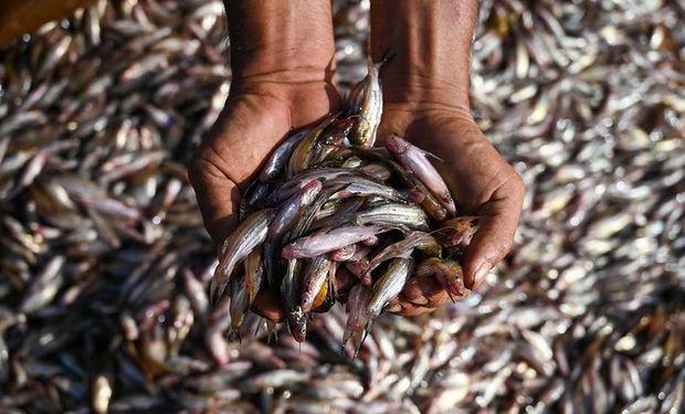 """World Food Prize: la investigación disruptiva de la ganadora del """"Nobel"""" de la alimentación"""