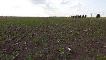 Ya se sembraron 6,7 millones de hectáreas de soja y se atrasa la implantación de maíz