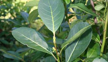 El Gobierno publicó nuevos parámetros para regular la calidad de la yerba mate