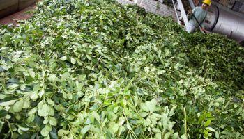 El Ministerio de Agroindustria fijó un nuevo precio para la yerba mate
