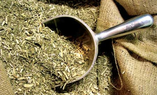 Sin acuerdo con la industria por el precio de la yerba