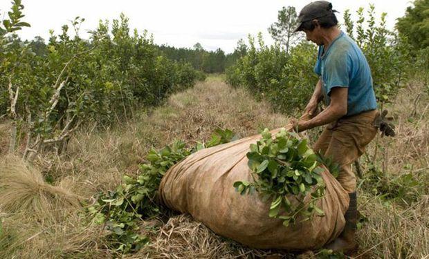 El Gobierno fijó un nuevo precio para la yerba mate