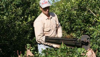Comisión Nacional del Trabajo Agrario: condiciones para la actividad yerbatera