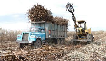 Por bajos precios y altos costos peligra la zafra de azúcar argentina este año