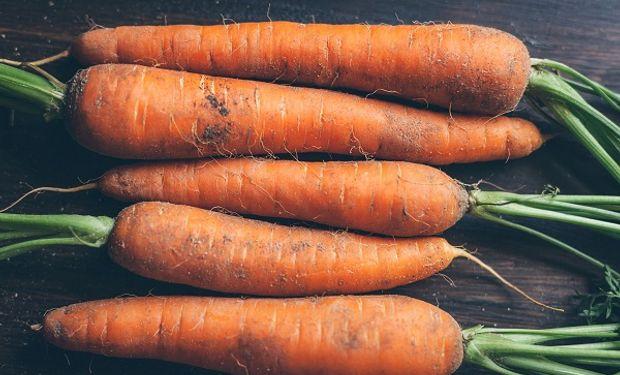 Reutilizan Los Desechos De Zanahoria Para Producir Bioetanol Agrofy News El aceite de zanahoria se ha convertido en un ingrediente popular en las lociones costosas, las cremas para la piel y los champús. reutilizan los desechos de zanahoria