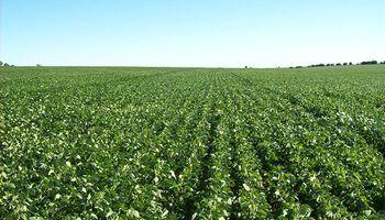 El 2015 recibe a los cultivos con óptimas condiciones